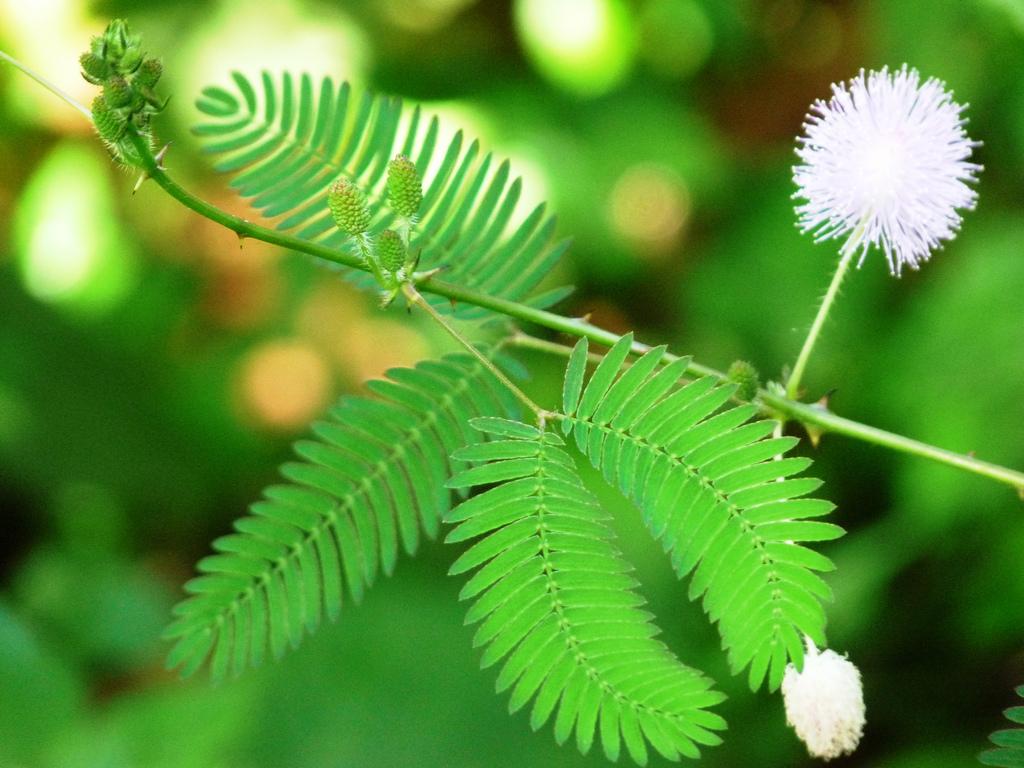 Le piante imparano e ricordano
